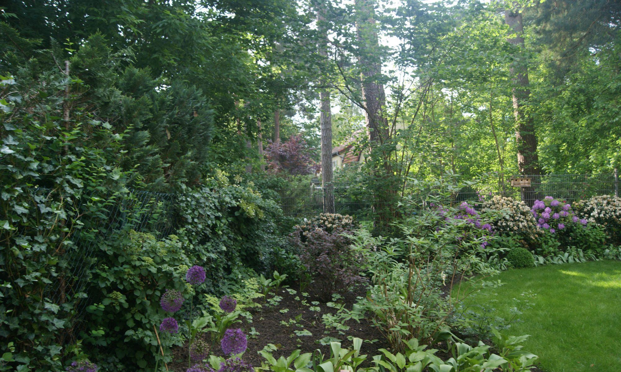 Puck im Garten